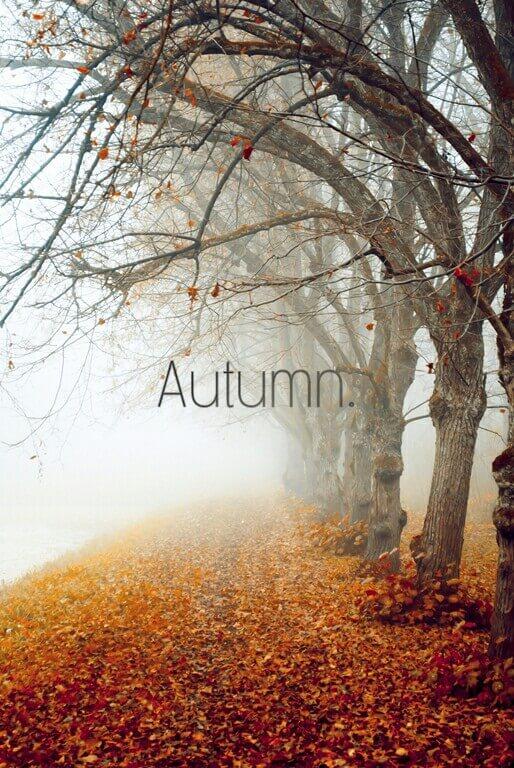 Autumn | 77 ideeën voor najaar 2016