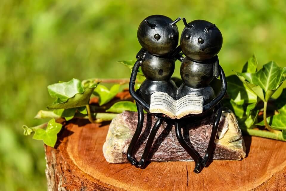 De saaiheid van mierenbiologie