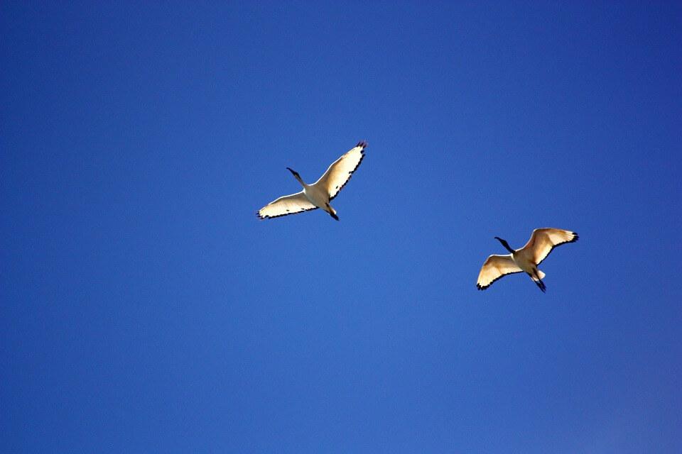 bird-350680_960_720