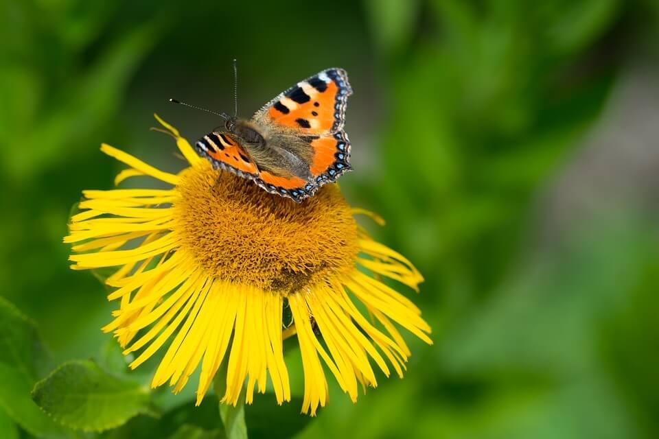 butterfly-2112214_960_720