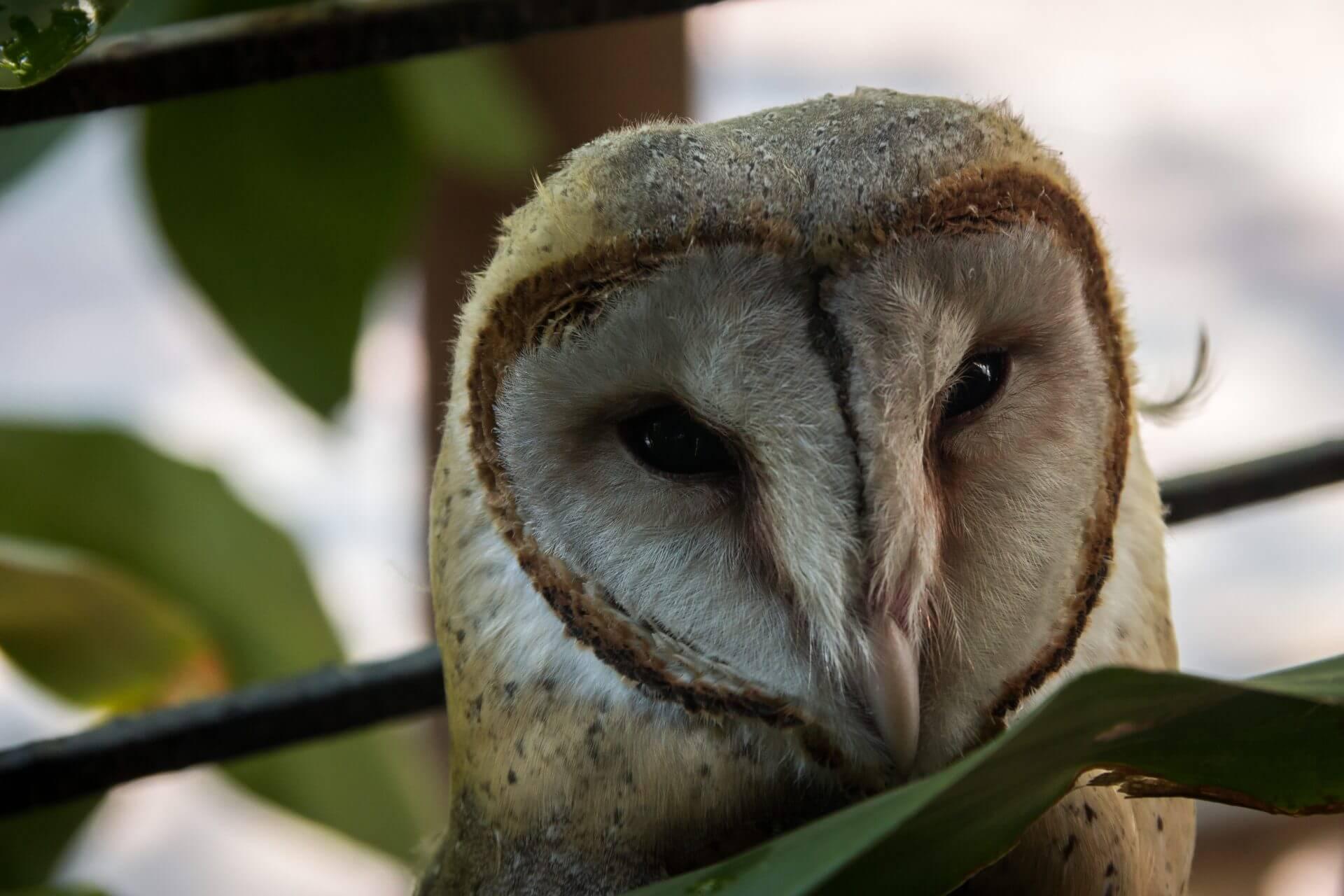 3 redenen om van uilen te houden | Leuke Lijstjes