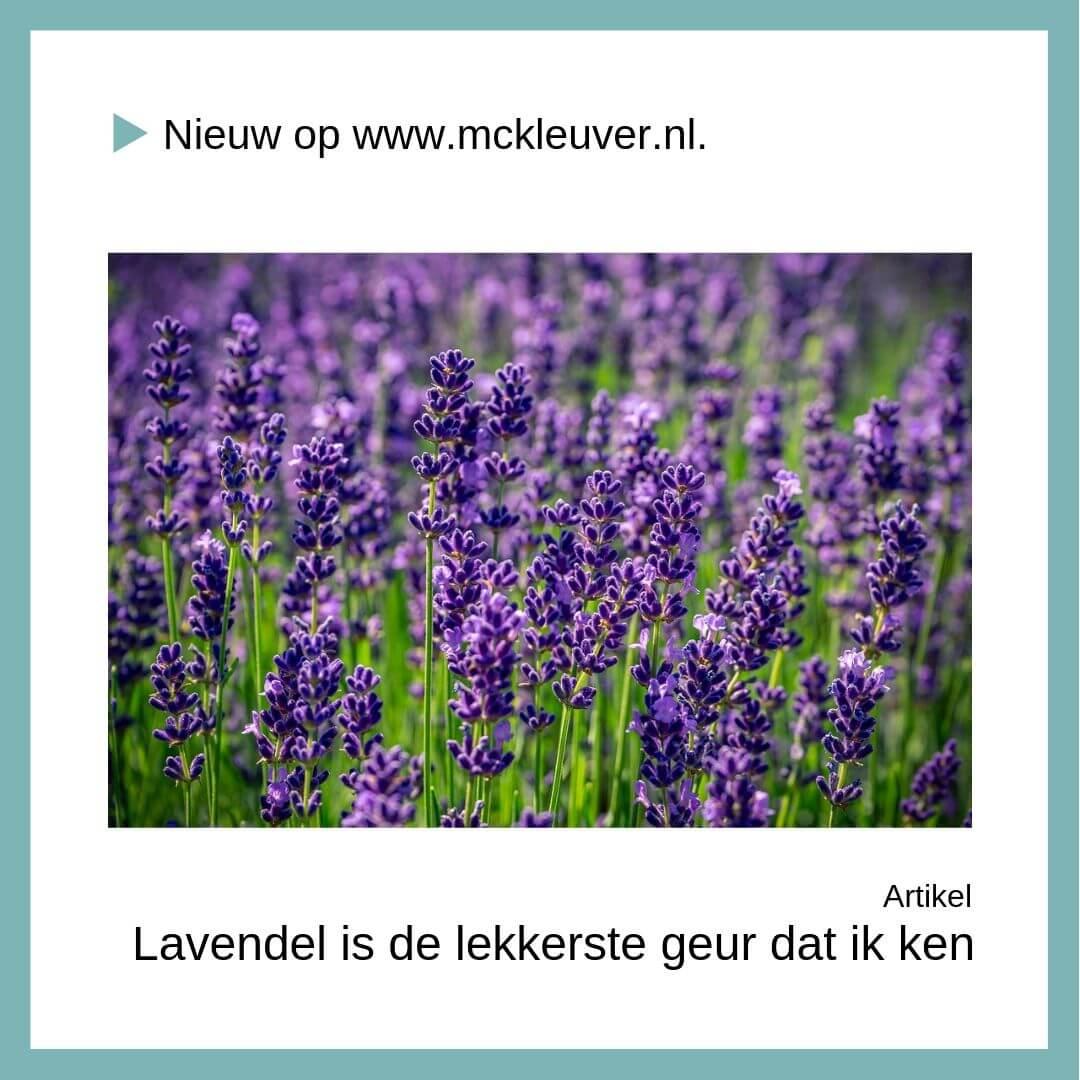 Paarse velden | Lavendel is de lekkerste geur die ik ken