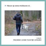 wandelen zonder hond