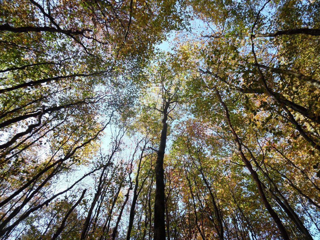 Boomtoppen met blauwe lucht en gekleurde bladeren