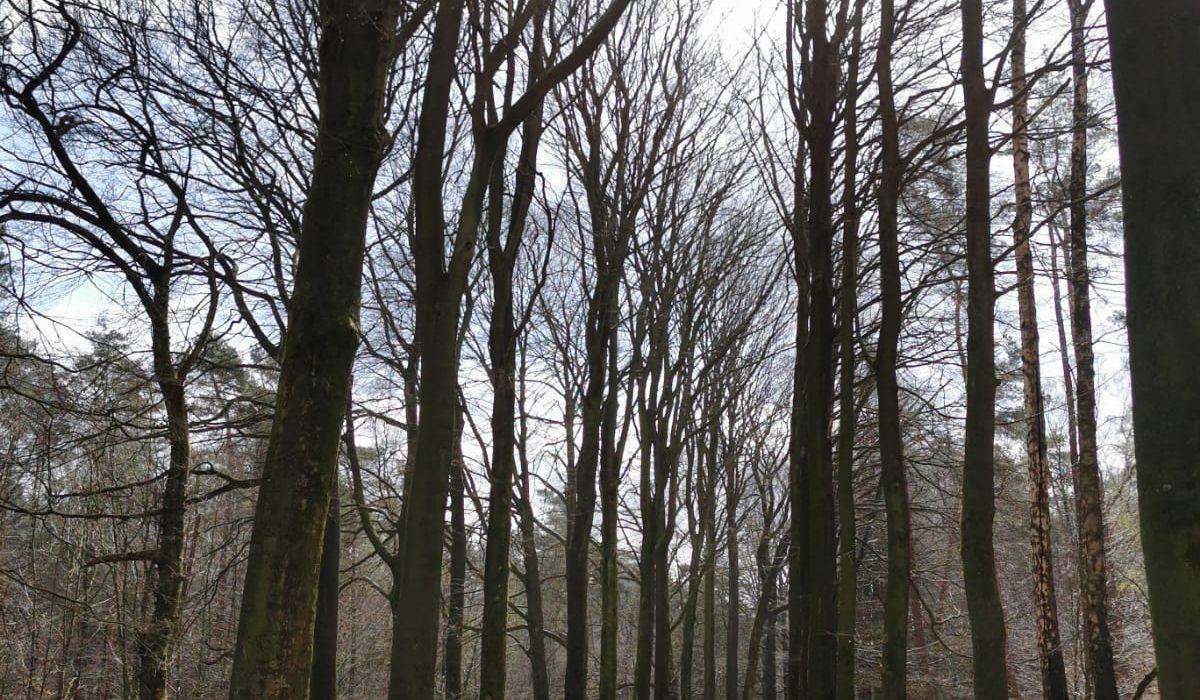 Zonnige bomenlaan