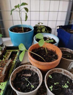 eigen bloemen en moestuin kweken