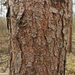 wortels van een boom