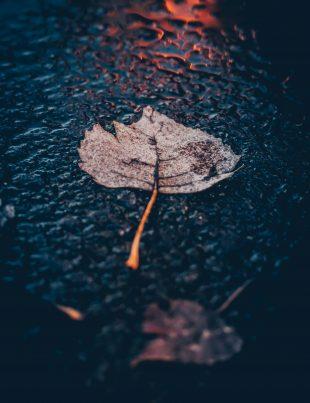 blad in regenwater